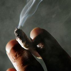 Курение конопли на подвижность сперматазоидов